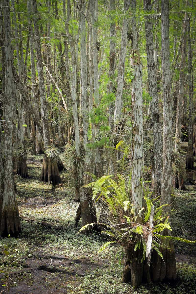Keys Made Near Me >> Hiking Dwarf Cypress Forest in Everglades National Park