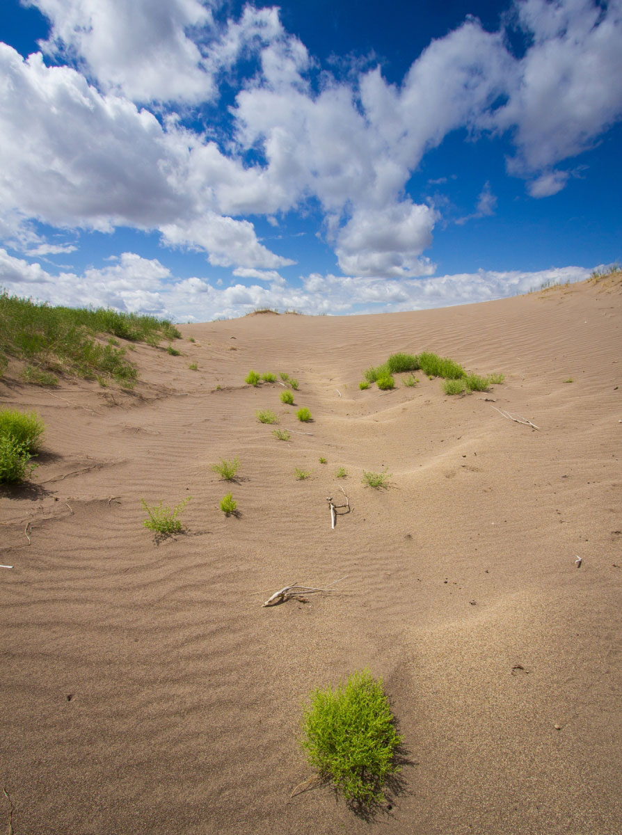 Hiking Star Dune and High Dune in Great Sand Dunes ...