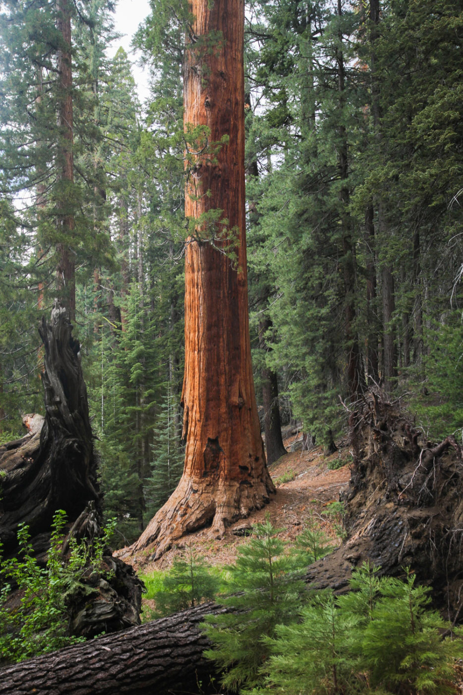 sequoia national park asian girl personals My main interests are mojave desert, las vegas, death valley/yosemite/sequoia national preserve (depending on the weather), san fransisco, monterey, big sur and los angeles, but i am flexible with sun, 07 oct 2018 12:35:44 +0000.