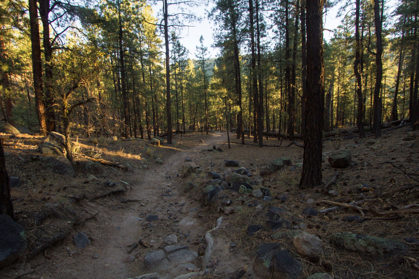 Hiking Mccauley Hot Springs In Santa Fe National Forest