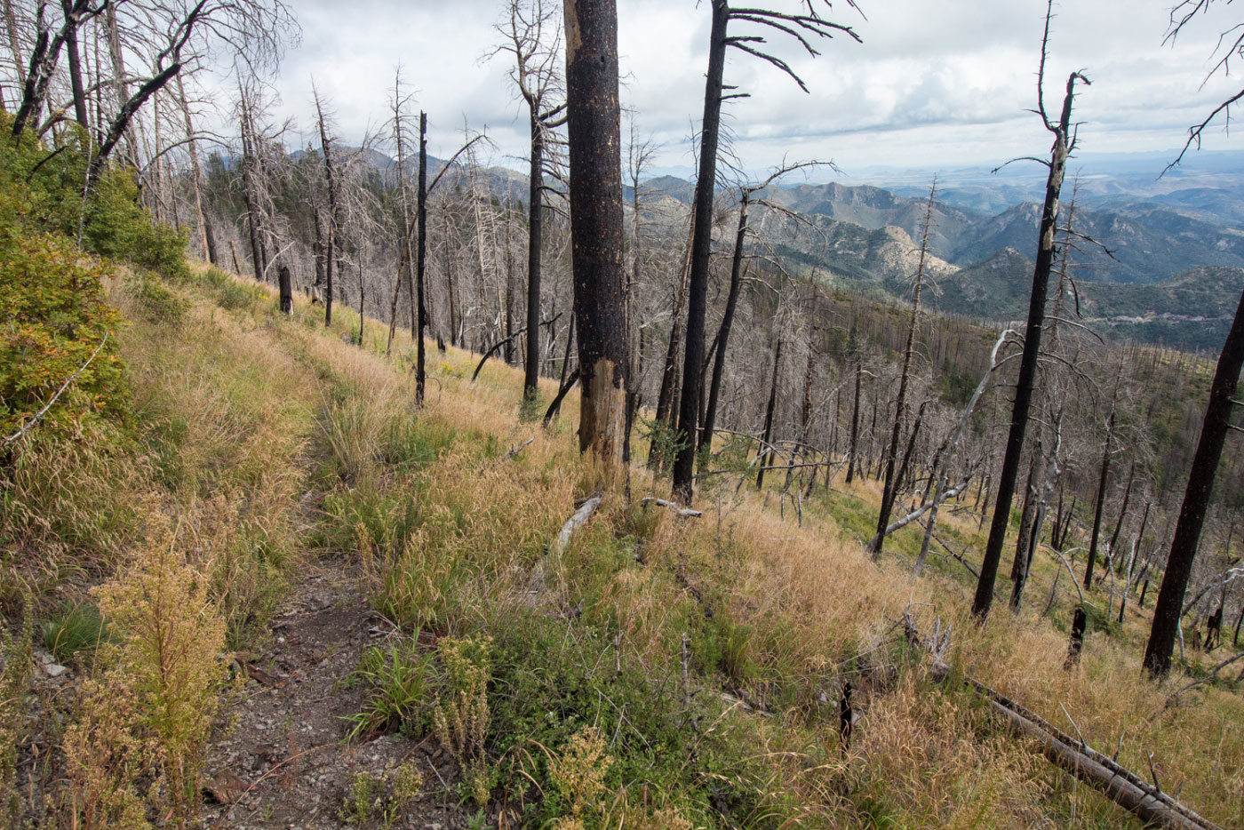Hiking Sawyers Peak in Gila National Forest, New Mexico