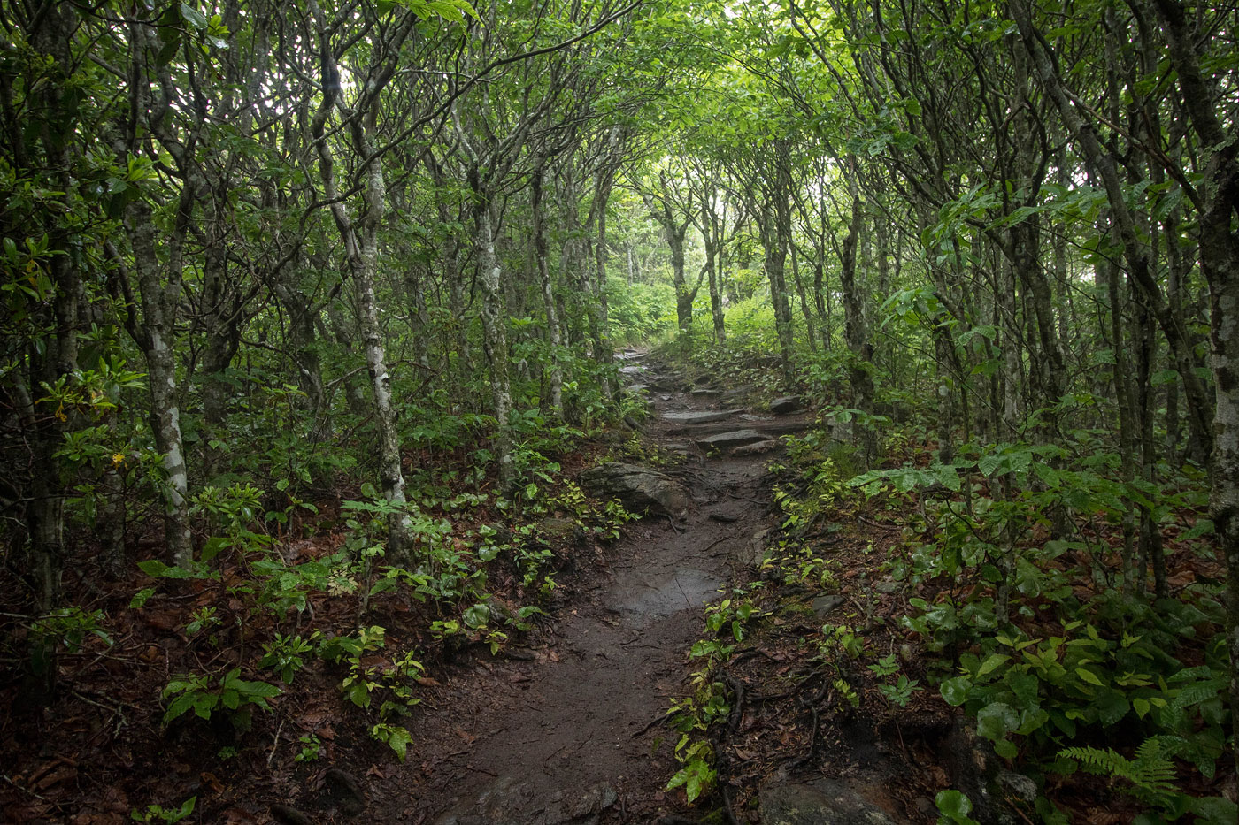 Trails Illustrated Pisgah National Forest Trail Map | REI ... |Pisgah National Forest Map
